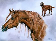 Watercolours Painting of Arab horse and dog friend.
