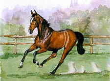 Watercolours Painting of horse galloping