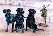Watercolours Painting of Labradors at Work