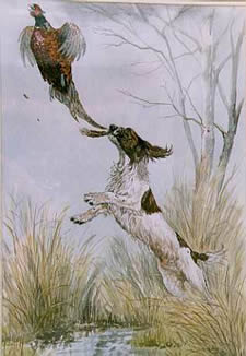 Watercolours Painting  of a Spaniel & Pheasant